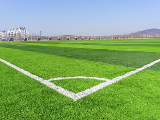 我国运动场草坪的发展现状和发展趋势
